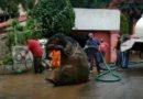 Félelmetes teremtmény került elő a csatornából Mexikóvárosban